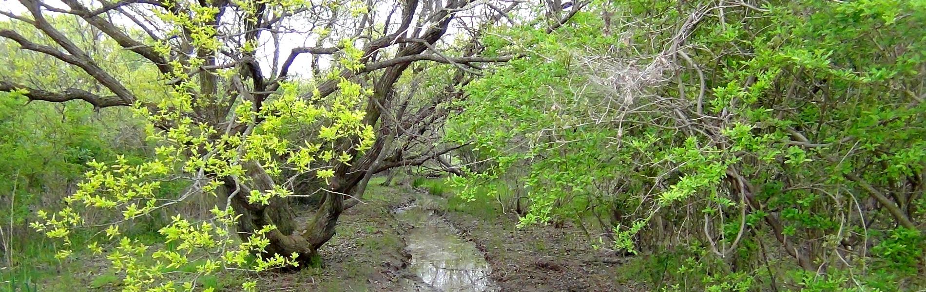 野鳥の森散策路の小川
