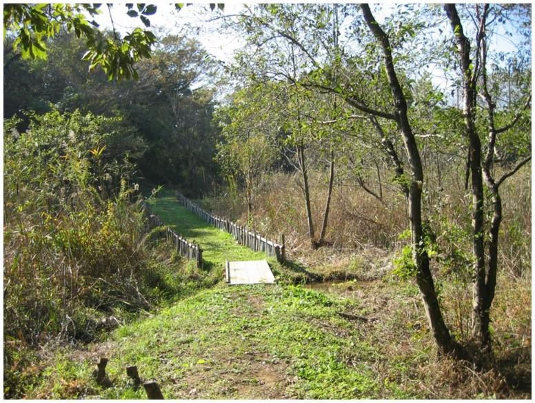 野鳥の森南ルート